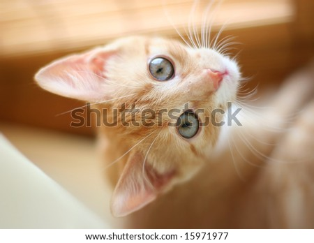 red playful kitten - stock photo