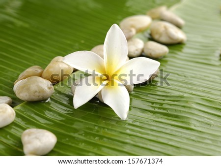 Red plumeria and stones on wet banana leaf
