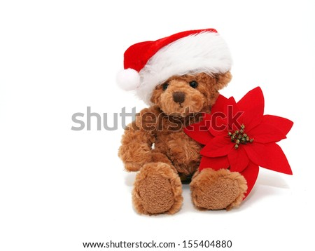 Red poinsettia and teddy  - stock photo