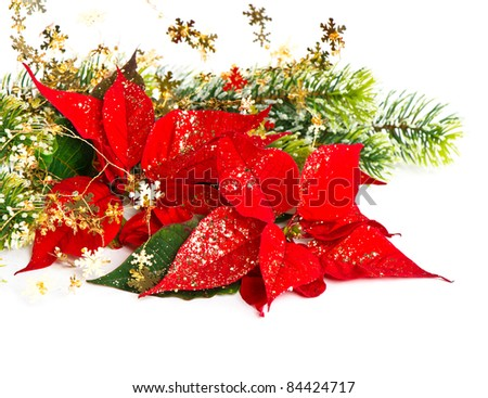 Red Poinsettia. Christmas Flower with golden decoration. card concept - stock photo