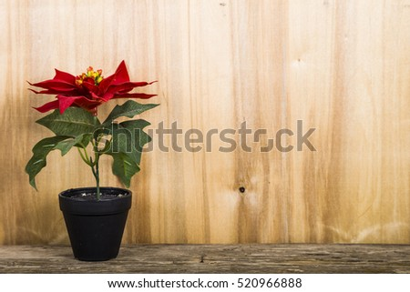 Red poinsettia in a pot on a wooden background