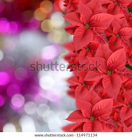 Red poinsettia on abstract bright background - stock photo