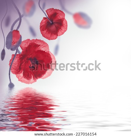 Red poppies field and blue cornflowers, floral background - stock photo