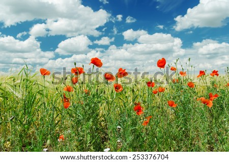 red poppies on green field under cloudy sky - stock photo