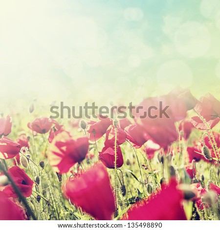 Red poppies on spring meadow (retro toned image). - stock photo