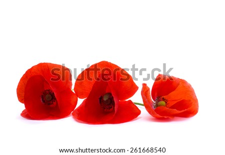 Red poppies on white background - stock photo