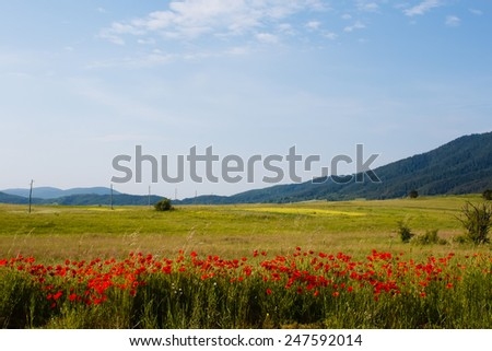 red poppy and green grass agricultural fields with electric power columns near the mountains in Croatia - stock photo