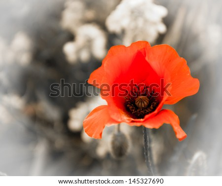 Red poppy and rape flowers on aged background. Selective focus. Retro style greeting card. - stock photo