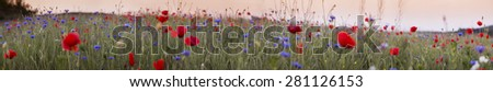 Red poppy field,panorama photo