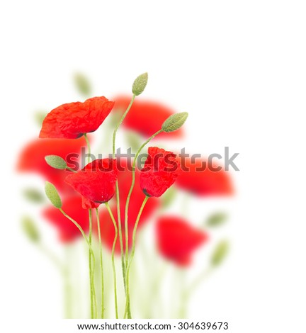 Red  poppy flowers with buds on white background