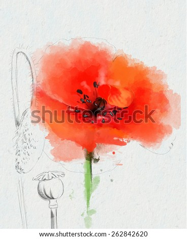 red poppy, with elements of the sketch, watercolor painting - stock photo