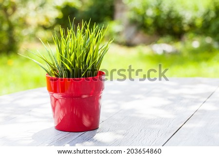 red pot filled with spring flowers  - stock photo