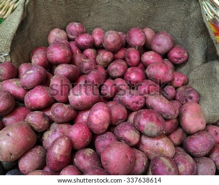 Red Potatoes: Large pile of freshly dug red potatoes piled in burlap covered bin for sale at farmers market. - stock photo