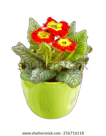 Red primrose in a flowerpot. Raster version. - stock photo