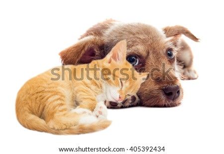 red puppy and kitten lying