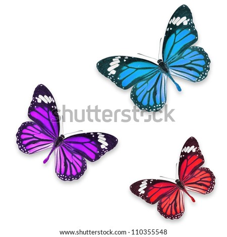 Red Purple and blue butterflies isolated on white with soft shadow beneath each - stock photo