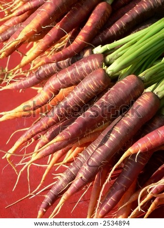 Red, purple and orange carrots - stock photo