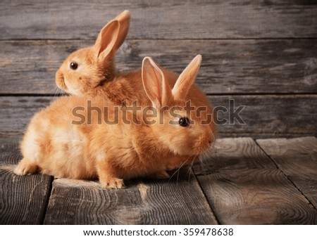 red rabbits on wooden background - stock photo