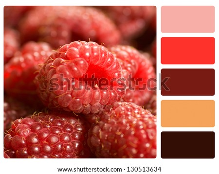 Red Raspberries color palette with complimentary swatches. - stock photo