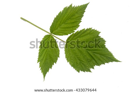 Red raspberry
