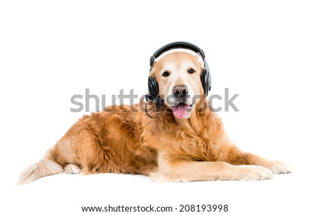 red retriever with headset lying on the floor - stock photo