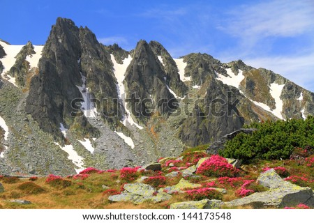 Red rhododendron flowers on mountain slopes, Romania - stock photo