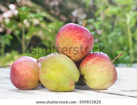 red ripe apples on table in garden  - stock photo