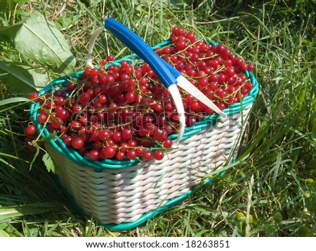 red ripe currant berry