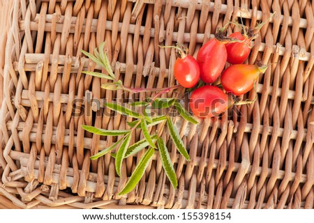 Red ripe rose hips - stock photo