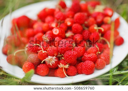 red ripe strawberry plate on green grass, selective focus
