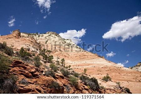 Red rock and Trees. National park Zion. Utah - stock photo