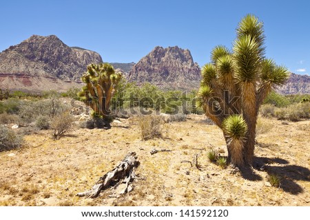 Red Rock Canyon near Las Vegas Nevada. - stock photo