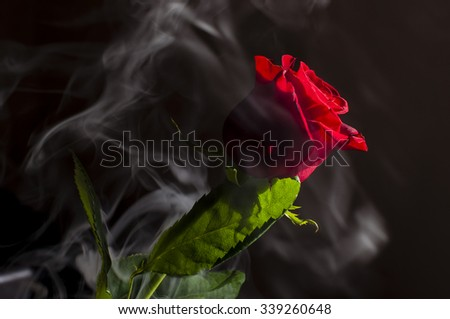 Red Rose Black Background