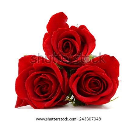 Red rose blooms by day - stock photo