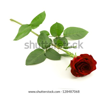rose bud single personals Single rose bud and thistle buttonhole with rose leaves other colours are available on request also photographed is the pageboy buttonhole vg612bud-934.