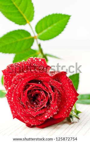 Red rose covered with water droplets on white background - stock photo