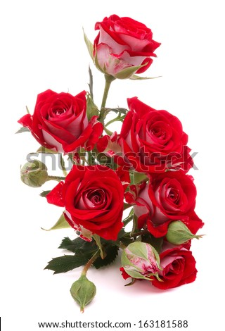 Red rose flower bouquet isolated on white background cutout - stock photo
