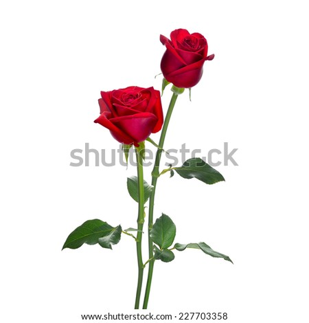 Red rose flowers isolated on white background - stock photo