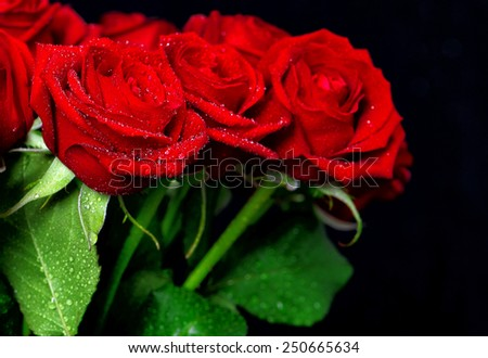 Red rose flowers with water drops over dark background. Festive arrangement - stock photo