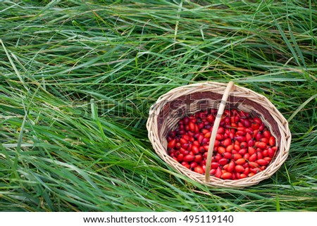 Red rose hips in wicker basket on green grass. Autumn concept. Copyspace left.