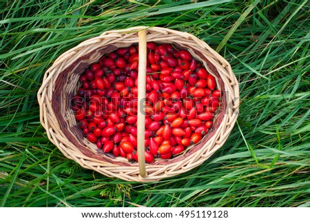 Red rose hips in wicker picnic basket on green grass. Autumn concept. Top view.