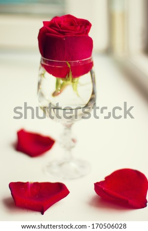 red rose in a glass