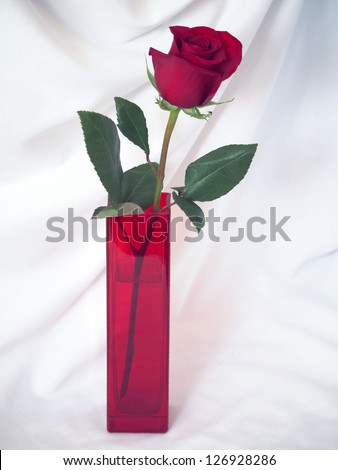 Red rose in a glass red vase