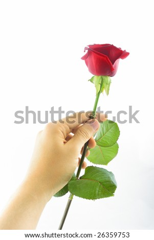 red rose in hand 2
