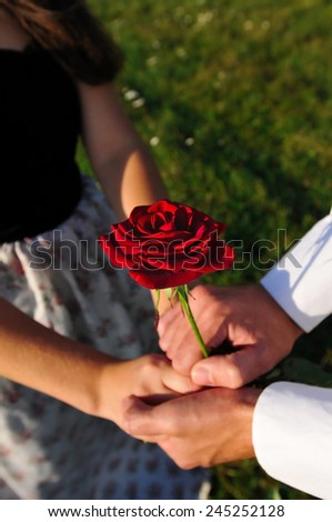 Red rose in hands of lovers outdoor