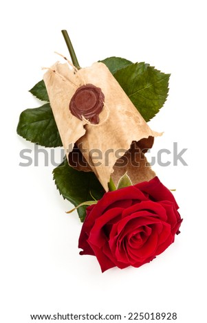 Red rose in old parchment isolated on white background. - stock photo
