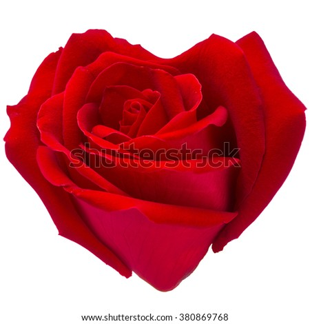 red rose isolated on white background,heart shape - stock photo