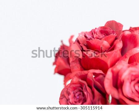 red rose isolated on white background holiday background - stock photo