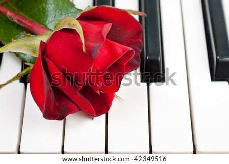 Red rose lies on the piano keyboard - stock photo