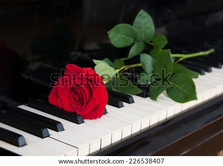 red rose lying on the piano keyboard